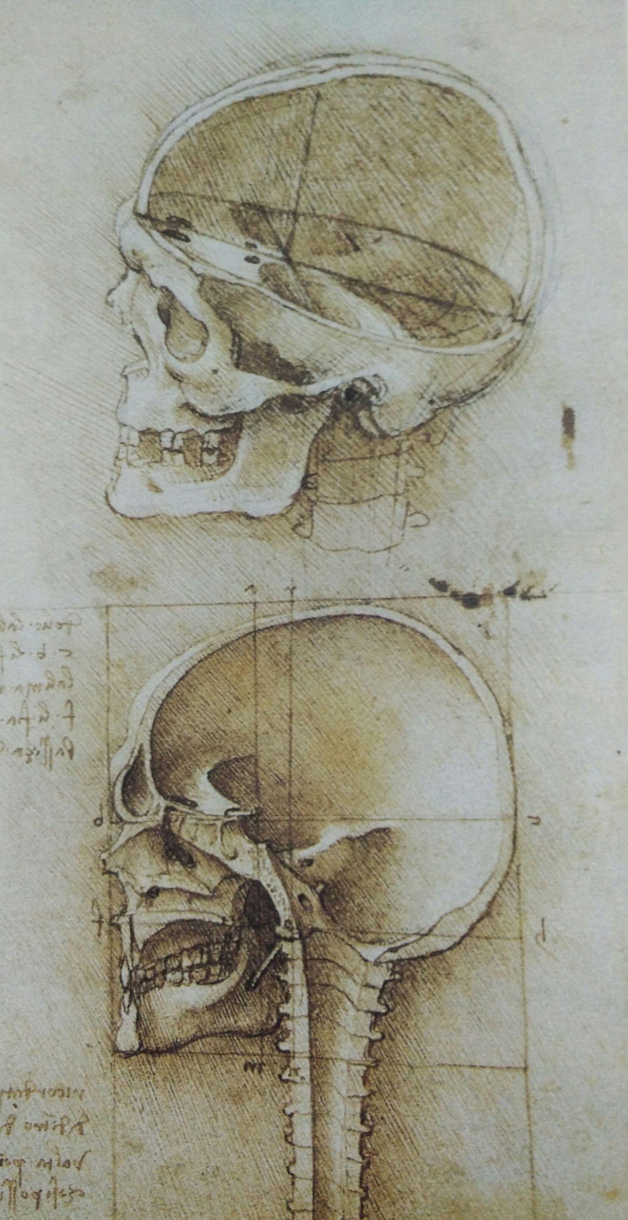 Leonardo da vinci portrait drawing 13g 21084095 collage leonardo da vinci on portrait drawing anatomy master class toneelgroepblik Choice Image