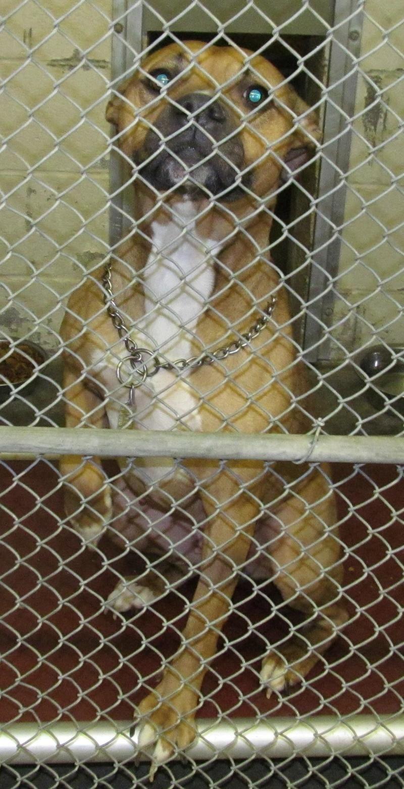 16+ Wetzel county animal shelter ideas