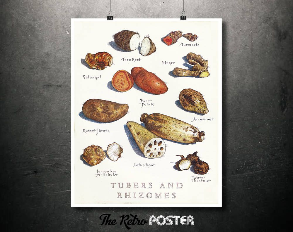 Great Tubers And Rhizomes   Food Poster Vintage, Food Gift, Food Print, Food Art,  Food Illustration, Kitchen Prints, Kitchen, Kitchen Decor