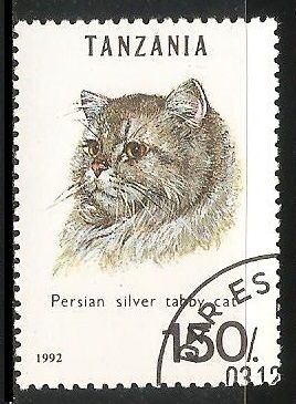 Persian silver taboy cat