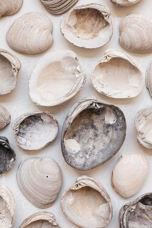 Underside Of A Collection Of Clam Shells By Kelly Knox Clam Seashell Stocksy United Beige Aesthetic Texture Inspiration Color Shapes