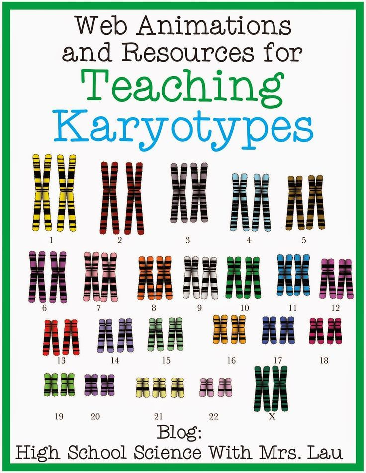 Teaching About Karyotypes And Chromosomes Science And Math With