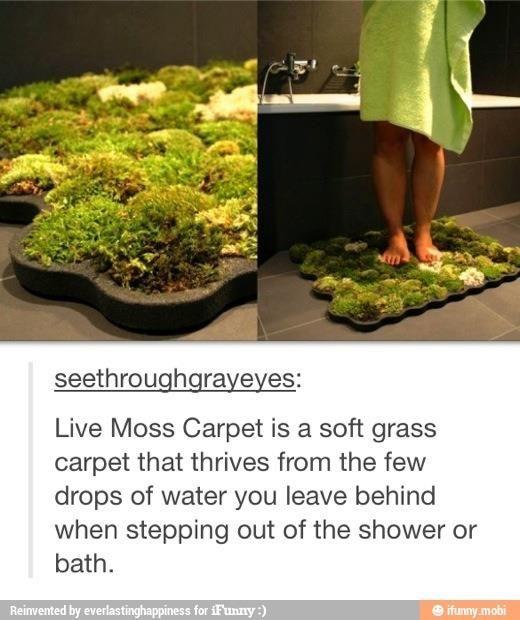 Indoor moss garden you water with bath water :D Love it!