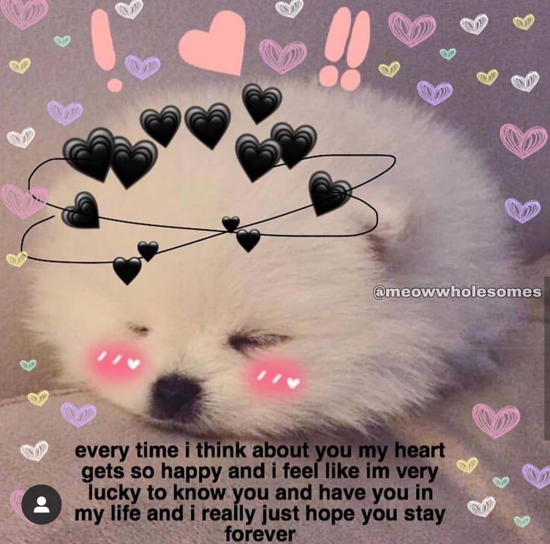 Pin By Juliet Dupuis On All My Luv N Affection Cute Memes Cute Cat Memes Cute Love Memes