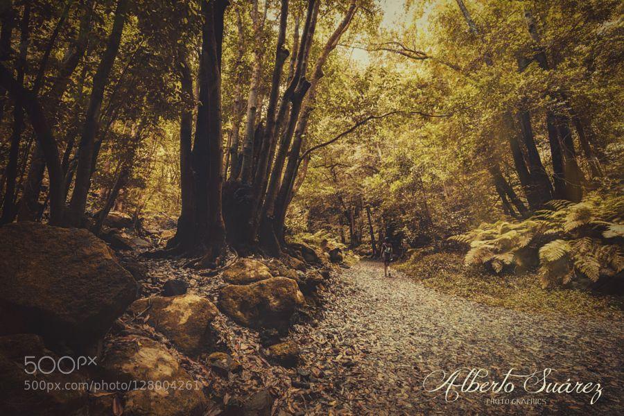 the enchanted wood_03 by AlbertoSuarez #nature