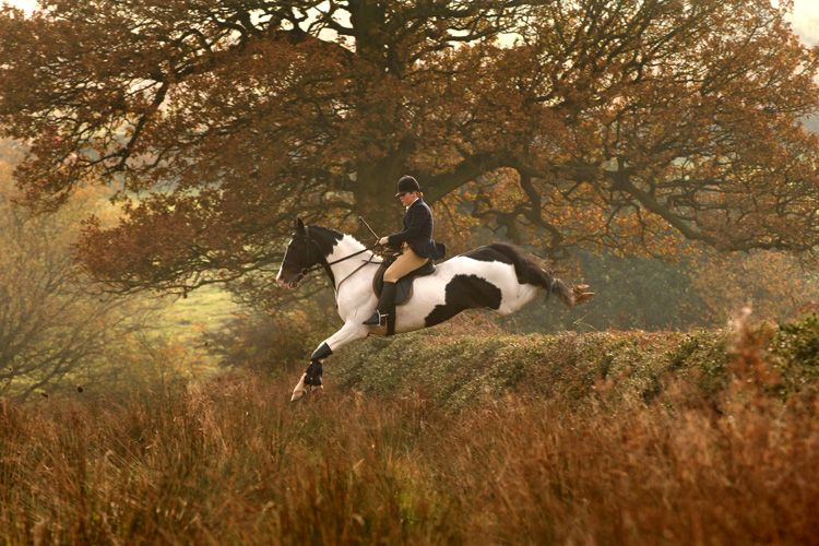 Beautiful foxhunting photo. I love this cunning little pinto horse! Sarah Farnsworth photo