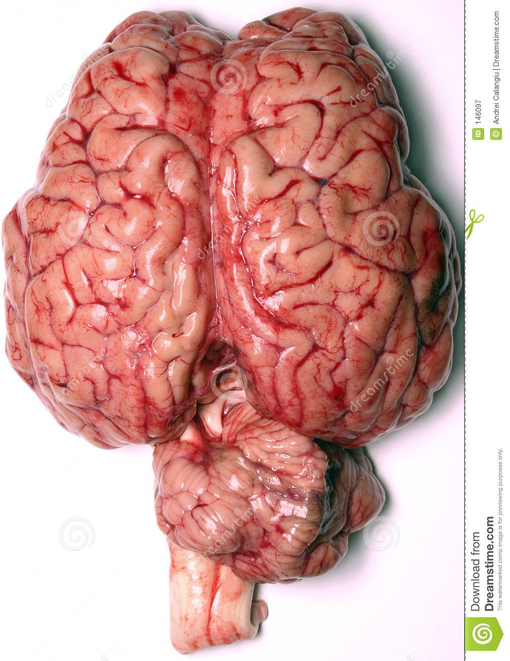 Increíble atlas del cerebro real que muestran qué genes se activan en cada micro-región y cómo todo está conectado.  Os dejamos un video muy interesante: http://www.experientiadocet.com/2012/02/allan-jones-un-mapa-del-encefalo.html