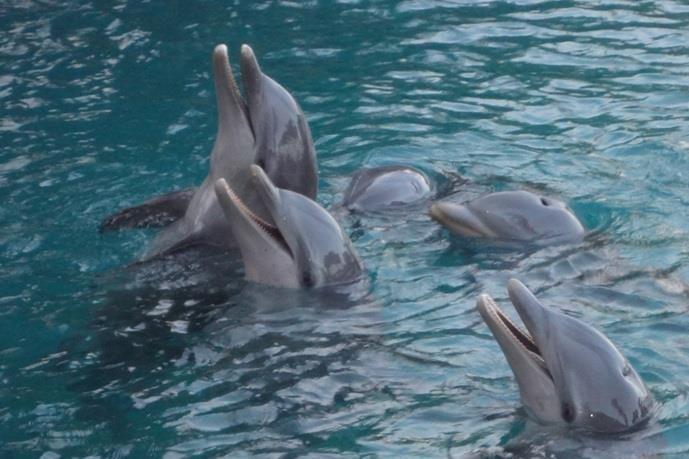 dolphin encounters bahamas internship