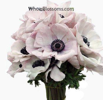 Anemone Blush Tinted Dark Center With Images Anemone Flower Blush Wedding Flowers Bouquet Flower Bouquet Wedding