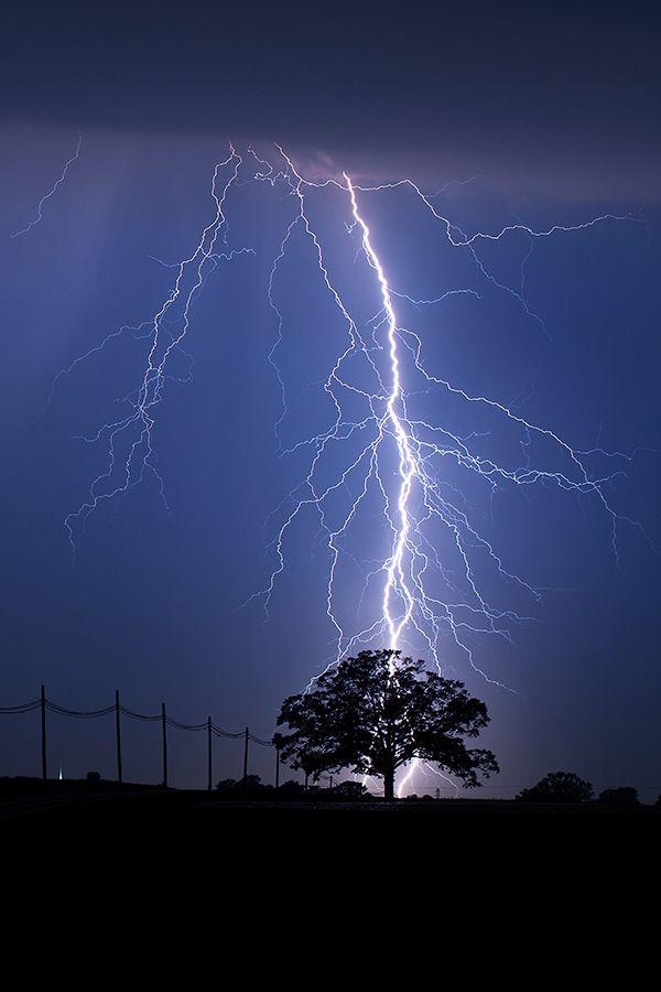 lightning strike behind tree mark van
