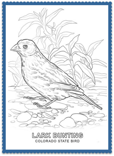 colorado state bird coloring page print or color online lark bunting