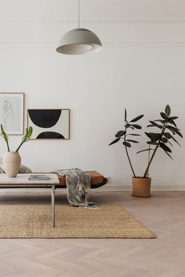 Idea To Steal Rubber Leaf Plant Apartment 34 House