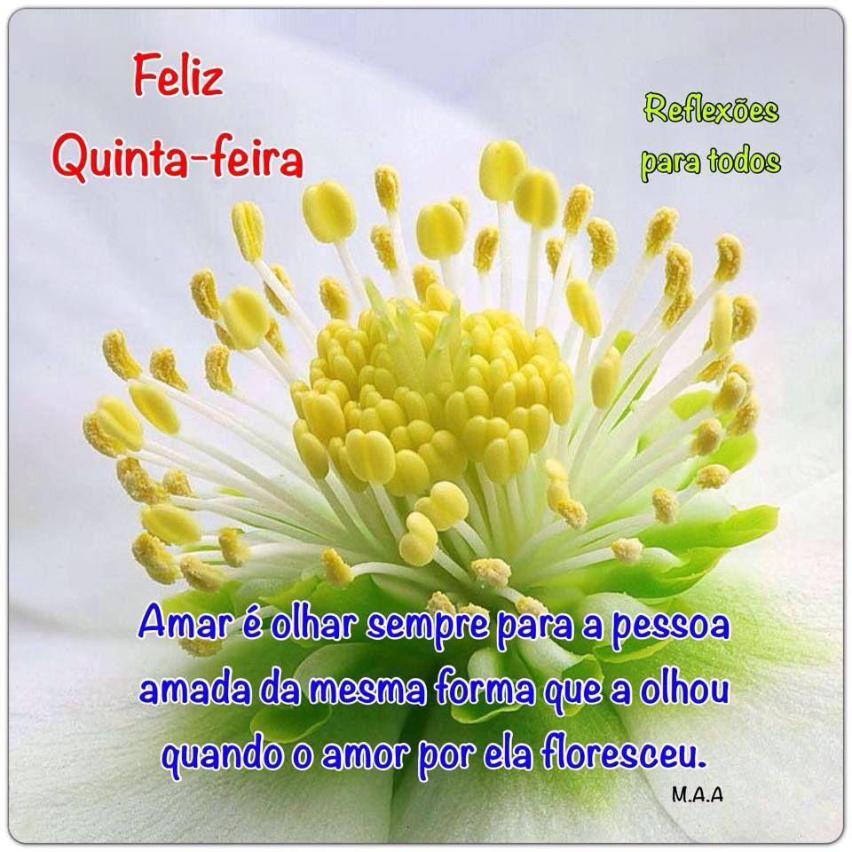 Acesse Bom Dia Amar é Várias Frases Feliz Quinta Feira