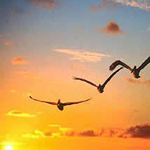 El Diccionario Del Sueno Sonar Con Pajaros Volando Aves Cielo