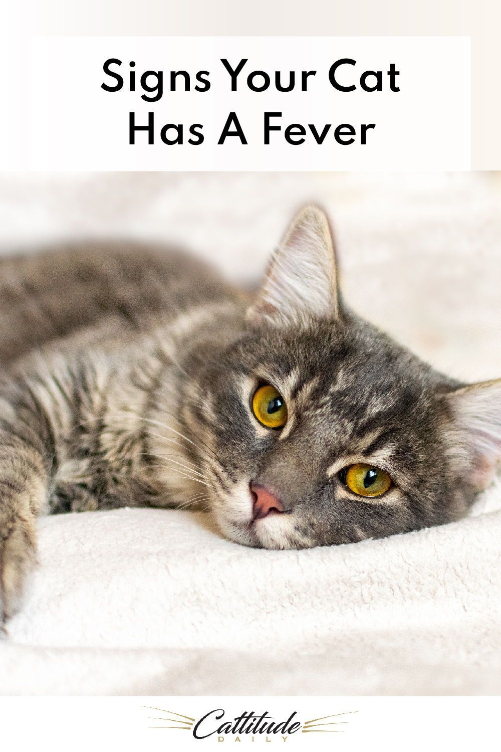 Signs Your Cat Has A Fever In 2020 Cats Cat Problems Sick Cat