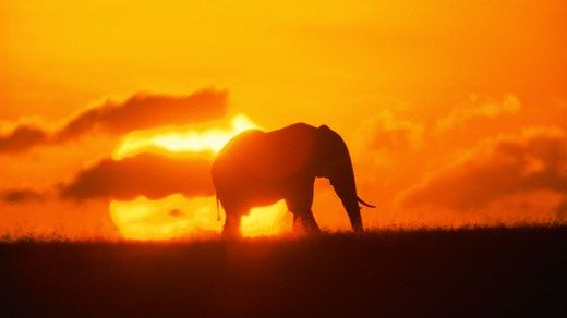 Elephant and sunset in Senegal.