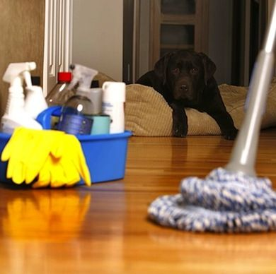 How To Clean Everything Cleaning Vinyl Floors Cleaning Hacks Domestic Cleaning