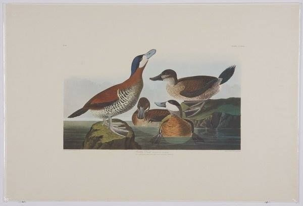 Just arrived...4 Audubon elephant folio size lithographs.  These are fab and so difficult to find anymore!