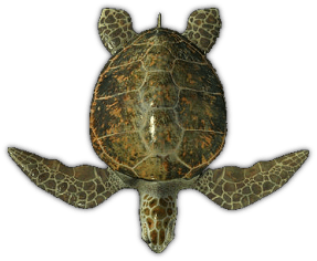 Sea Turtle Top View Transparent Png Stickpng Turtle Top Sea Turtle Turtle