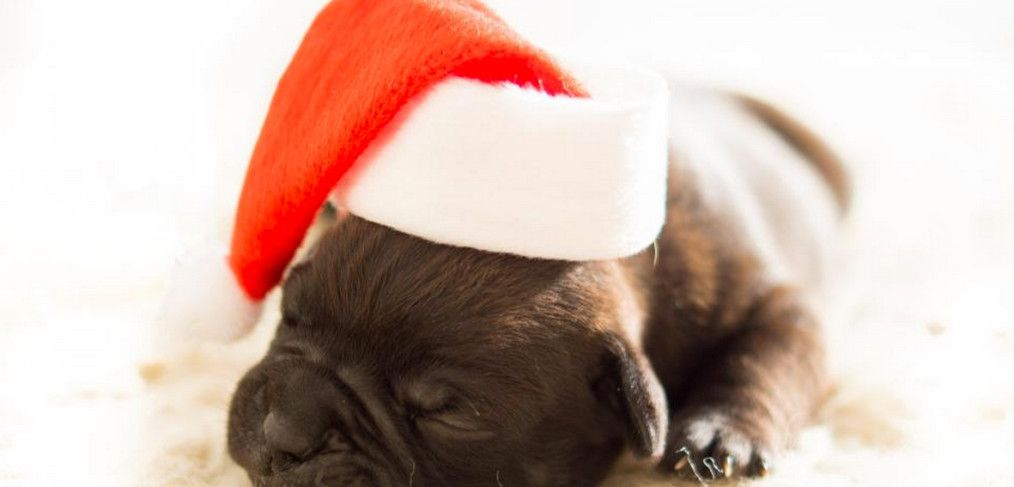 20 Actionable Tips on Crafting a Killer Social Media Strategy for the Holidays #socialMedia