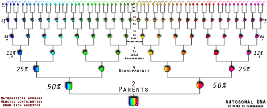 Dna Inheritance Chart Above Shows The Percentage Inherited By Each Line Relationship Charts