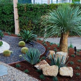 Yucca rostrata - may be hardy into Zone 6   Succulent ...