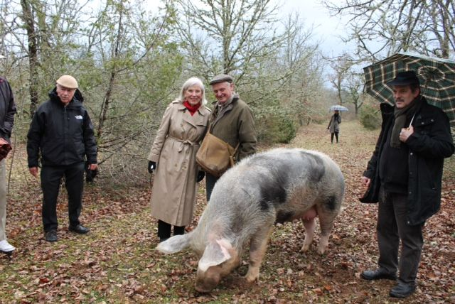 Pin By Gwen Hutchison On Nature Truffle Hunting Pig Animals
