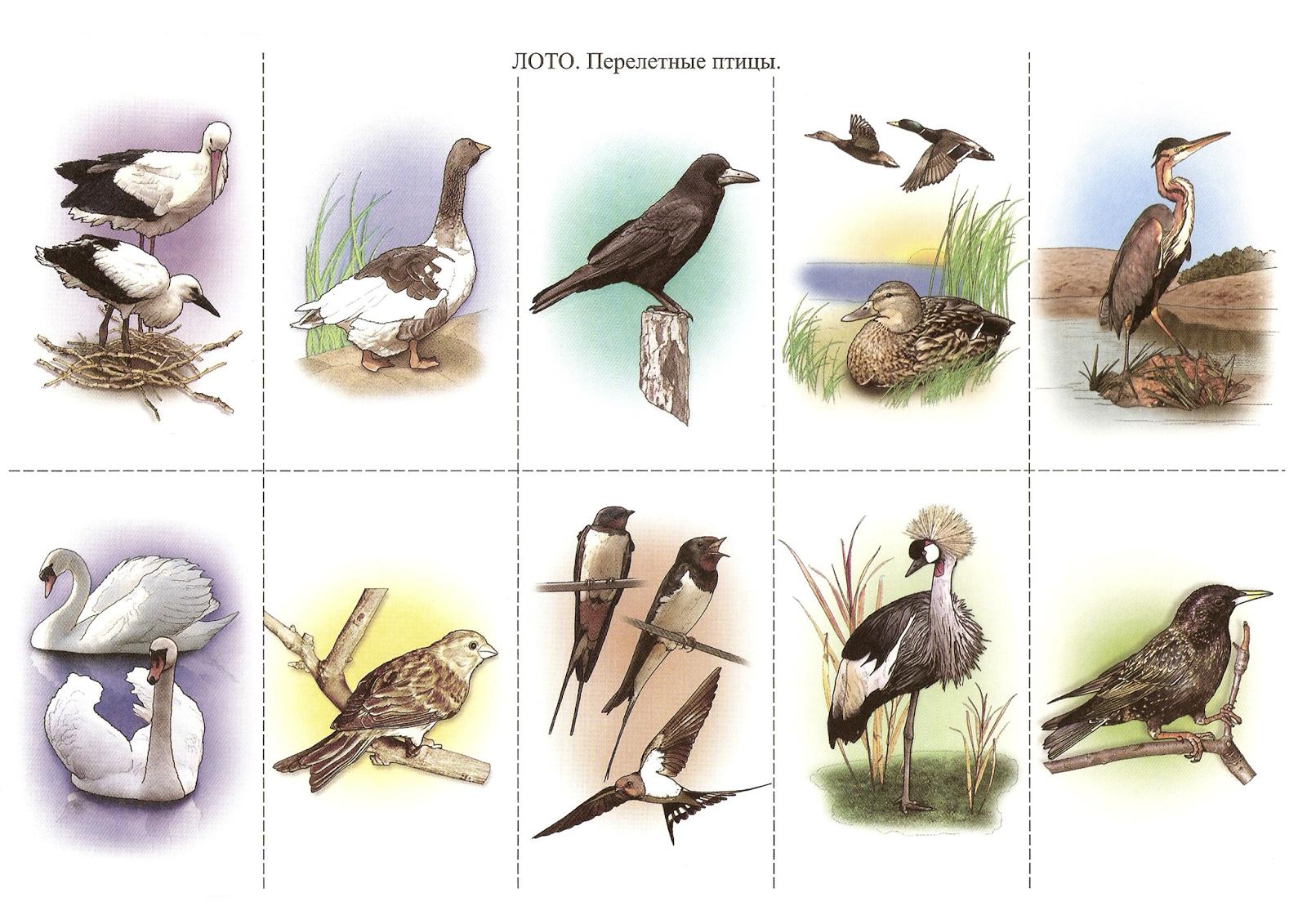 картинки перелетных птиц для печати