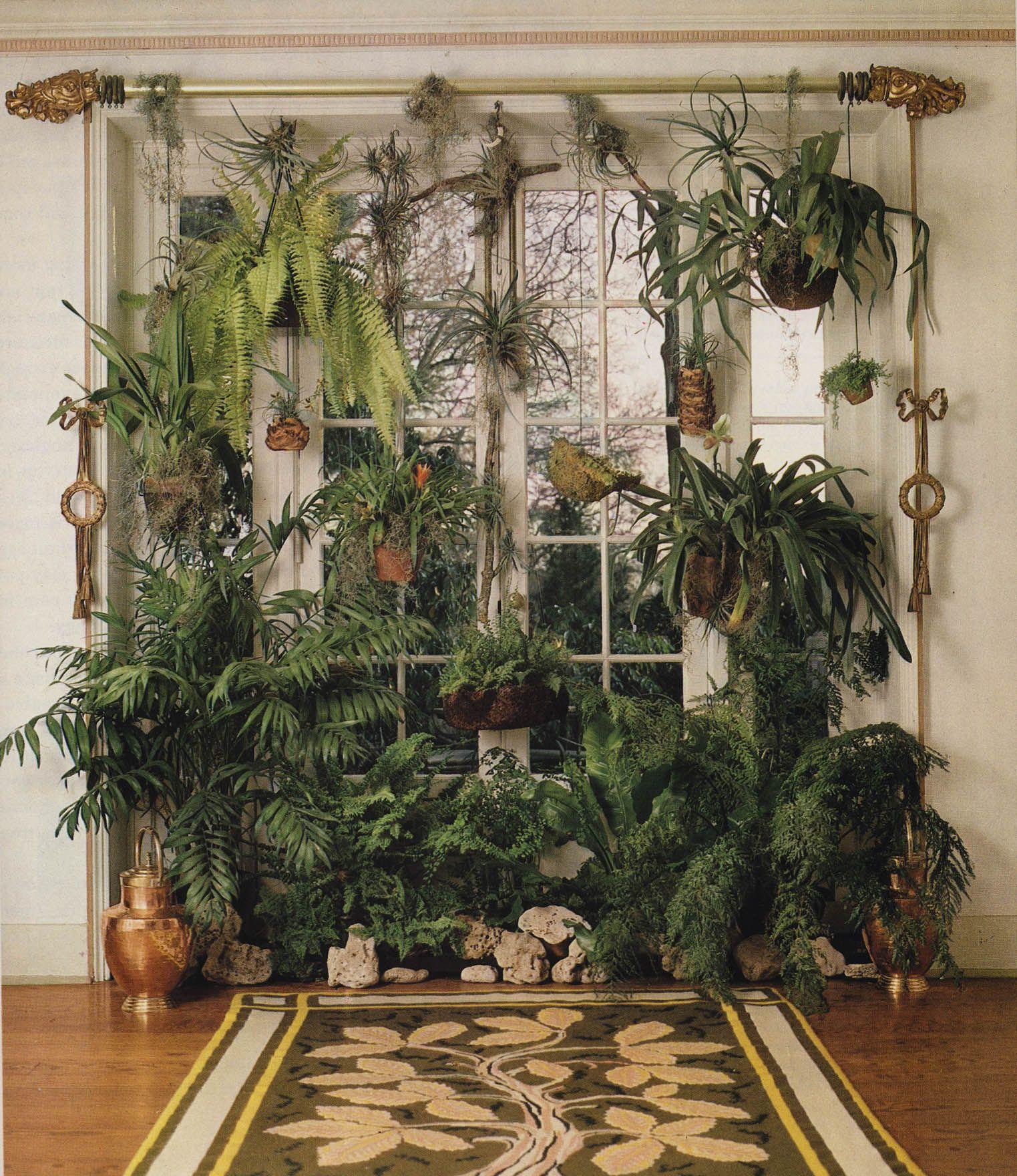 Nursery Indoor Plants Near Me: Plants, Indoor Garden, Indoor Plants