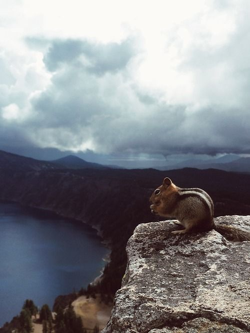 One of the many animal residents at Crater Lake enjoying an early morning snack accompanied by the beautiful scenery. #craterlakeoregon