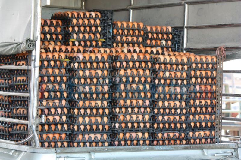 Blitz in aziende agricoli sequestrate 25mila uova