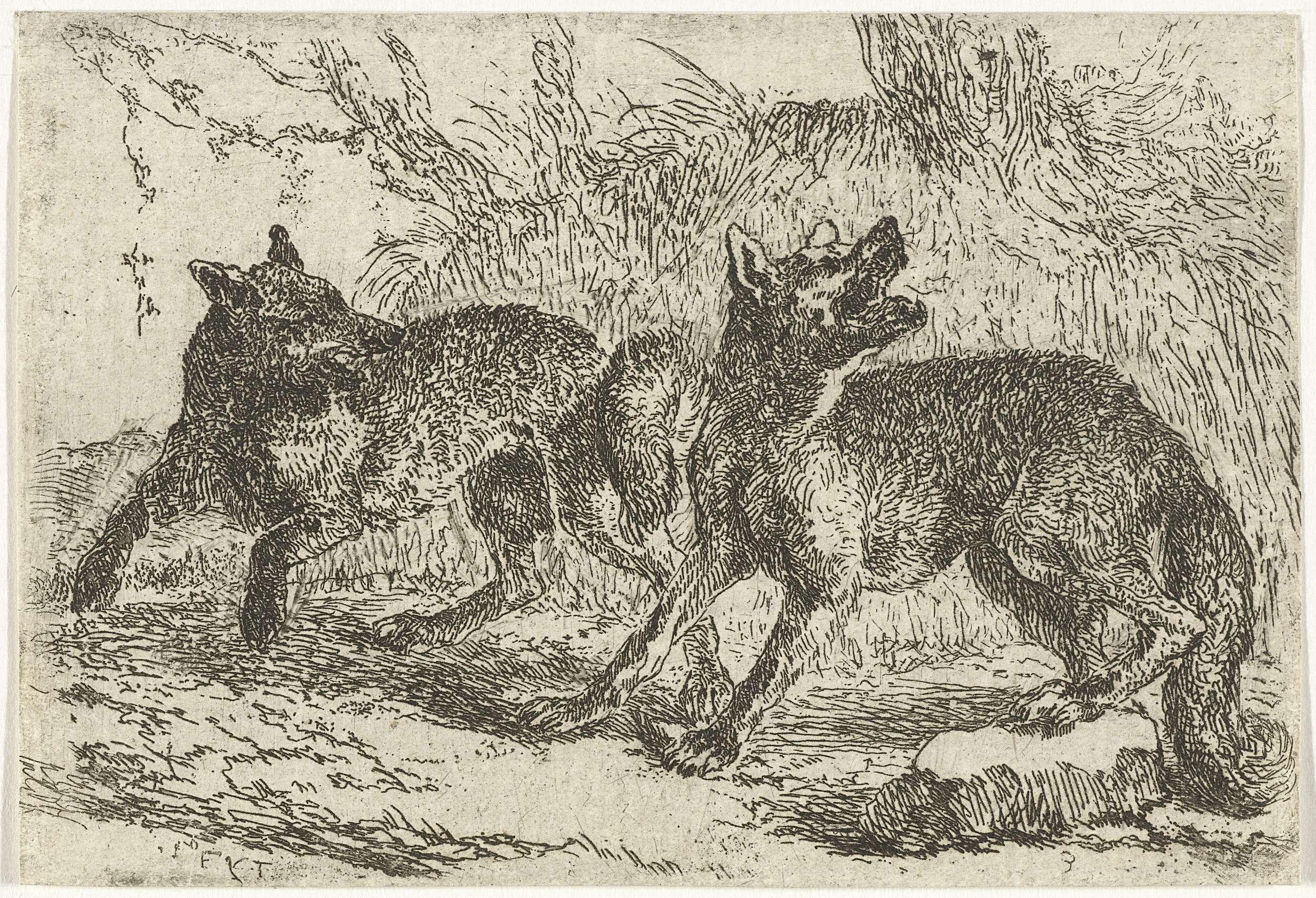 Jan Fijt | Twee wolven, Jan Fijt, c. 1621 - 1661 |