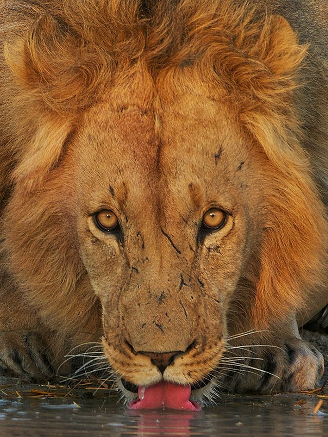 Central Kalahari Game Reserve Botswana Africas Best - Exploring south africa 10 best day trips