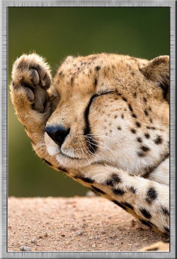 Digital Art Print Cheetah Cub Instant Download Cute Animal Print Large Format Living Room Office Nur