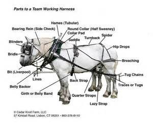 saddle horse harness parts diagram circuit diagram symbols u2022 rh veturecapitaltrust co Sulky Harness Diagram Harness Parts Diagram