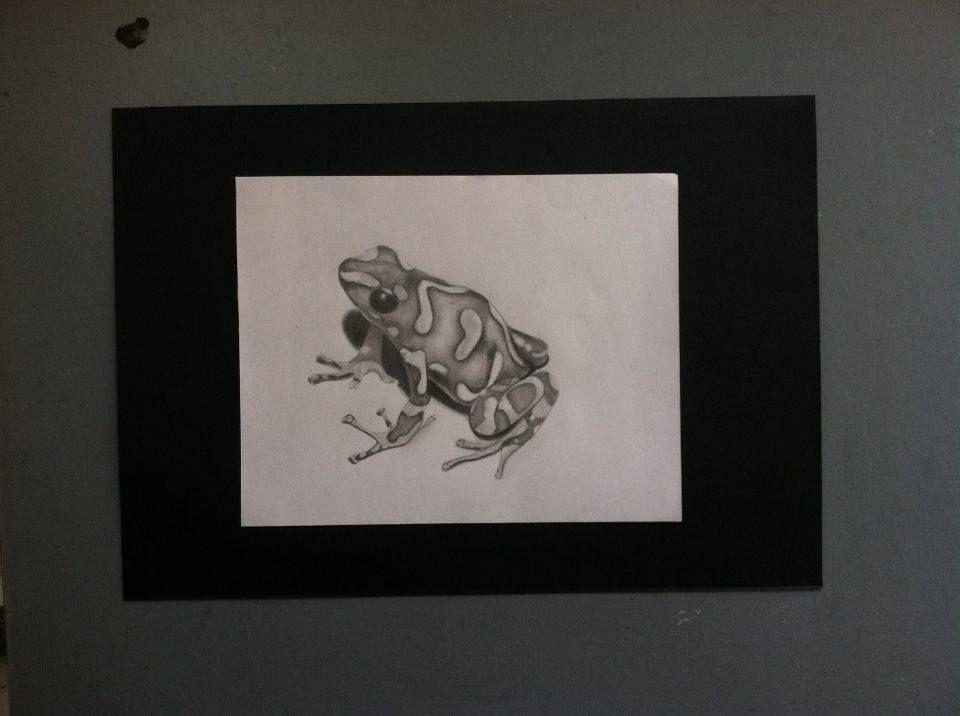 Una pequeña rana #Lapiz #Grafito #Bont