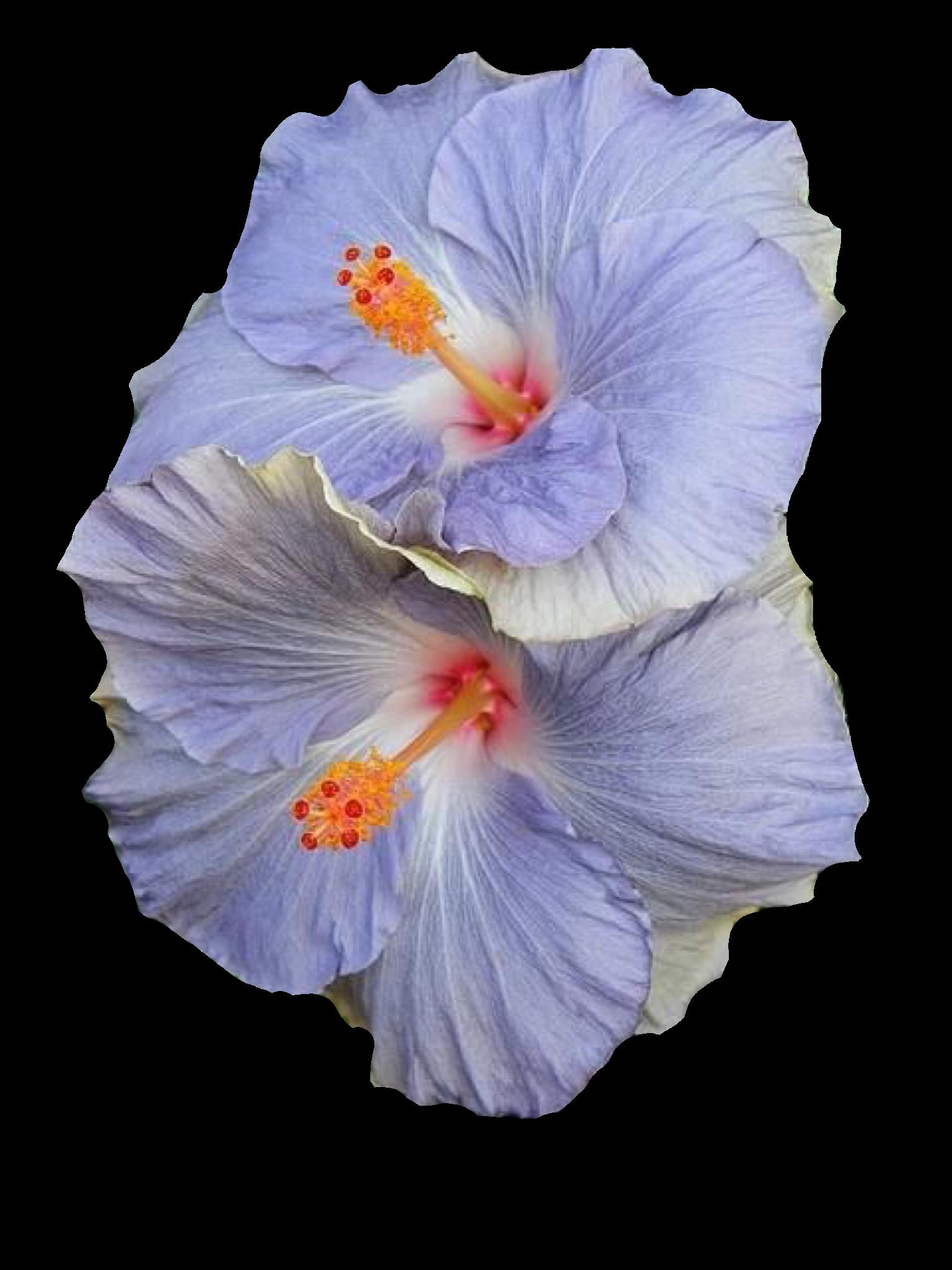 Blue flowers polyvore moodboard filler