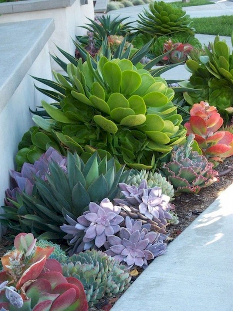 62 Lovely And Fresh Front Yard Landscaping Ideas Small Front Yard Landscaping Succulent Landscaping Succulents