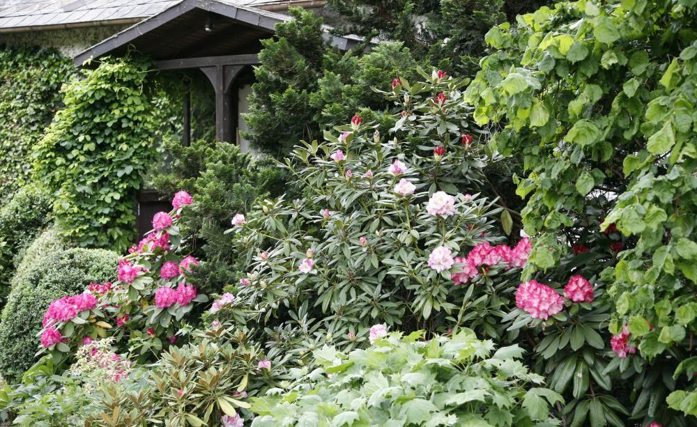 immergrüne pflanzen – pflanzen, pflege und tipps | entdecke, Gartenbeit