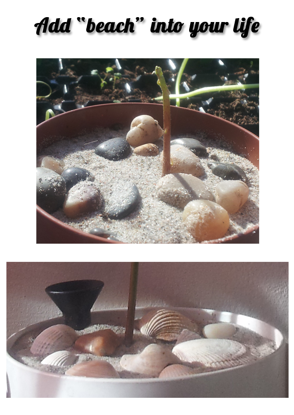 Adding sand into your flower pots will keep gnats away. I ...
