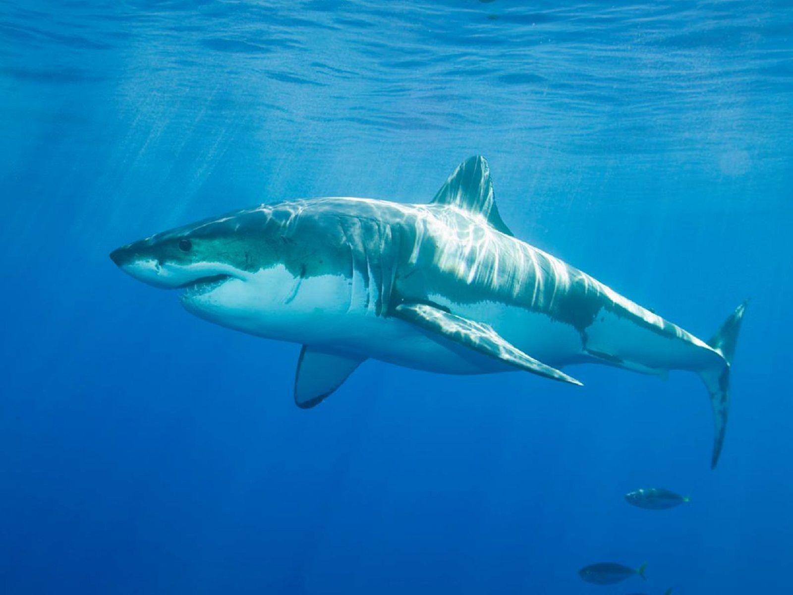 Great Barrier Reef Australia Sharks - Australia Places Ideas