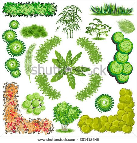 Stock Vector Trees And Bush Item Top View For Landscape Design Icon 301412645 450x470