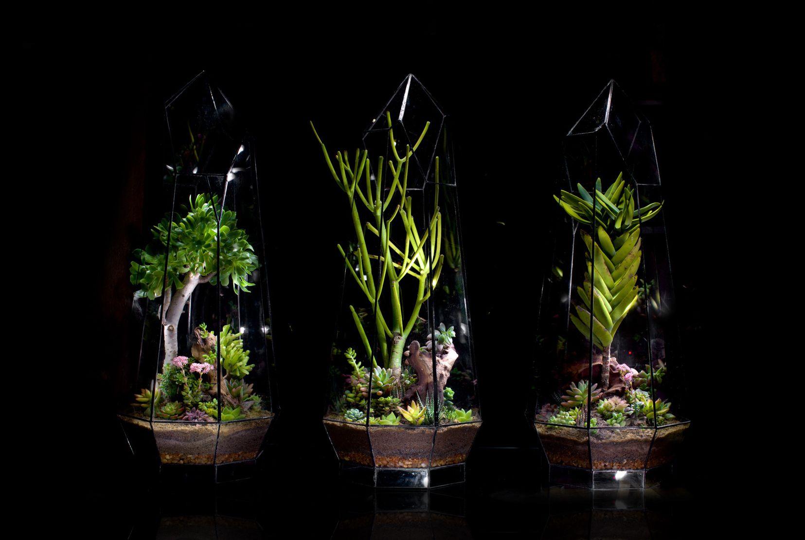 Crystal Terrarium selection by Angles & Earth Terrarium