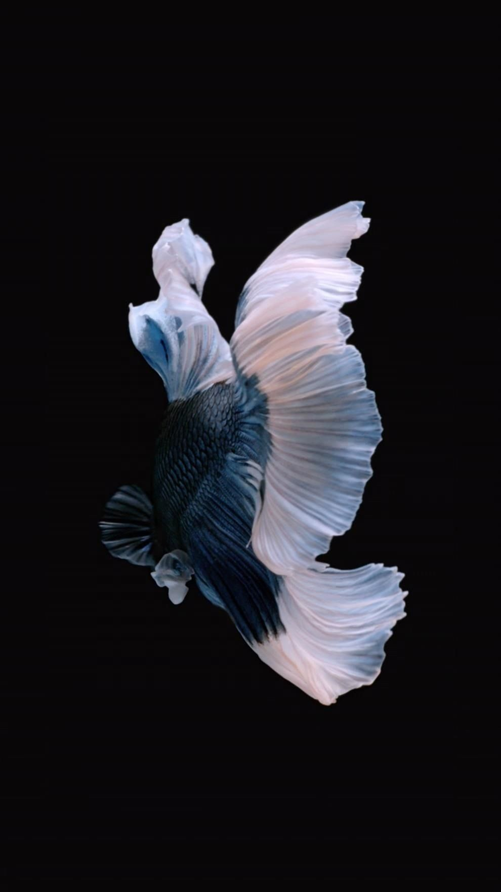 How To Get Back Apple's Live Fish Wallpapers on Your
