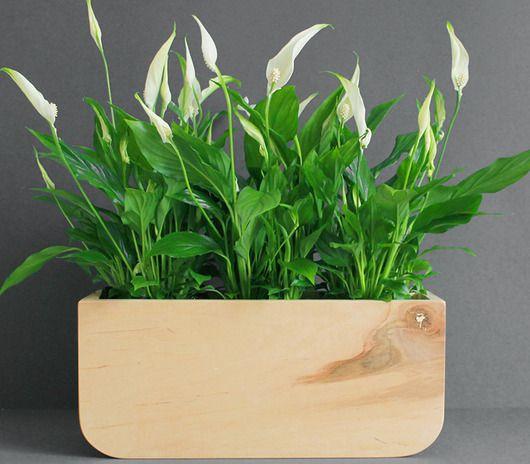 Skrzynka Na Kwiaty 3 Pakamera Pl Plants Planters Planter Pots
