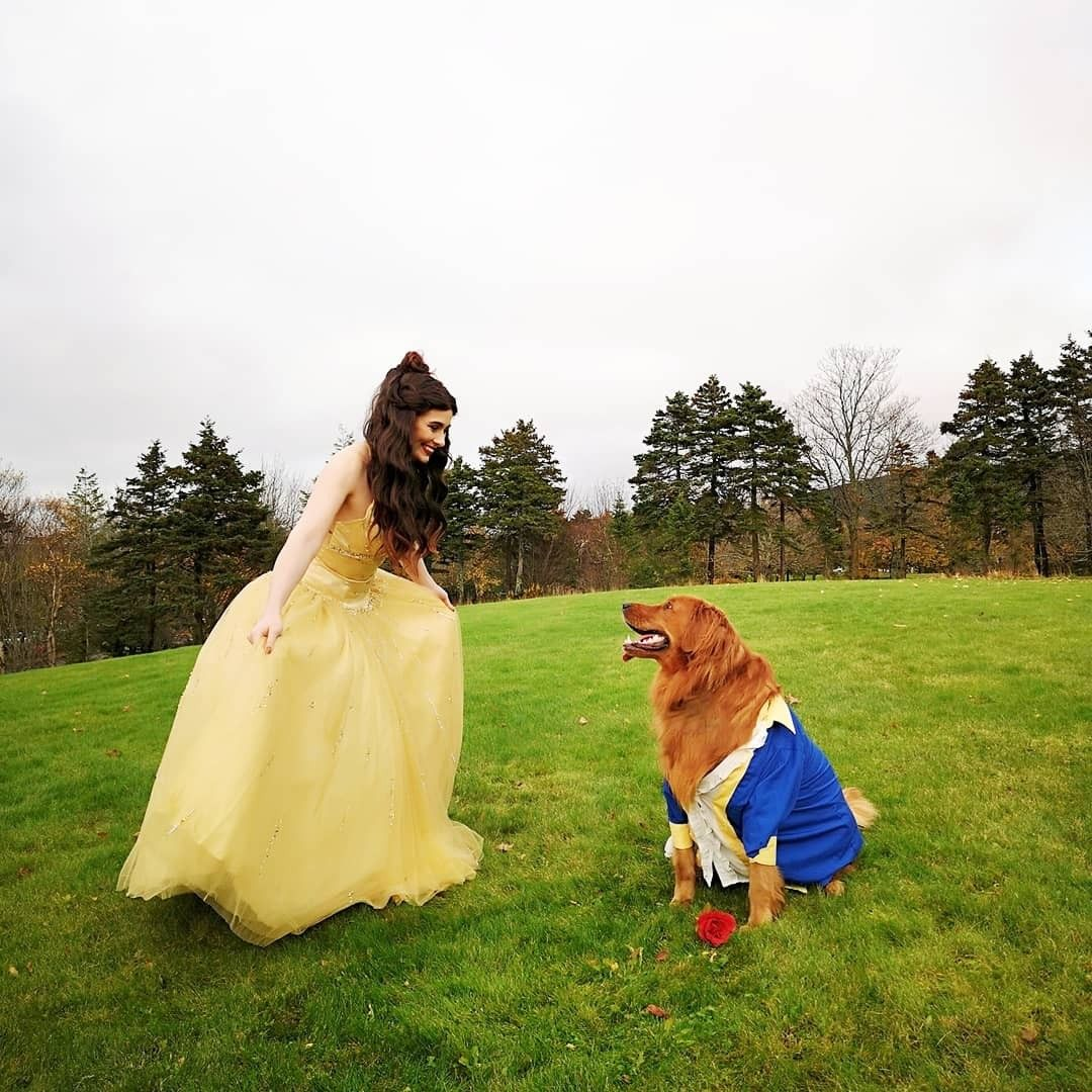 Dog Halloween Costume Golden Retriever Beauty The Beast