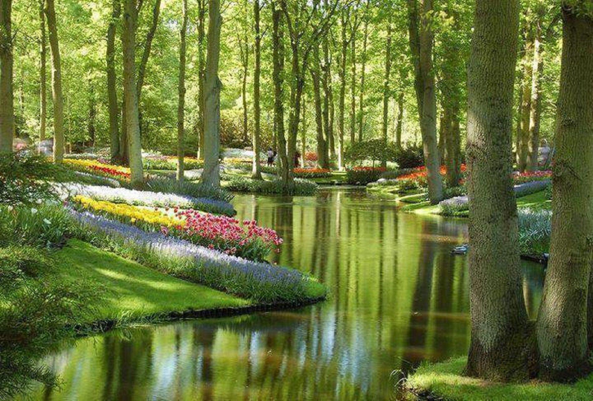 Forest Garden Desktop Background Wallpapers Hd Free 400 x 300