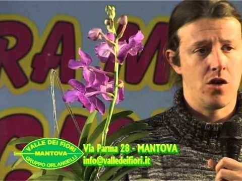 Valle dei Fiori_Corso Orchidee 4/4 - YouTube