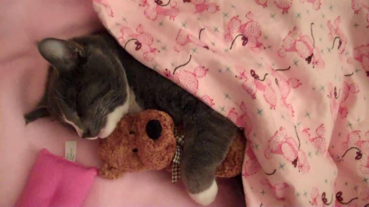 Cute Kitty Cat Loves To Hug His Teddy Bear Cat Hug Baby Cats Cats