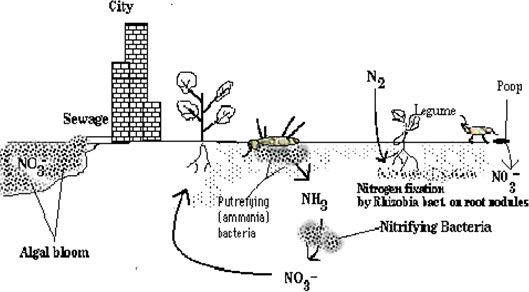 Nitrogen Cycle Experiments For Kids Google Search Homeschool